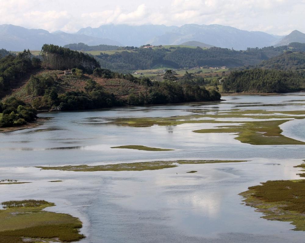 Parque Natural de Oyambre_21